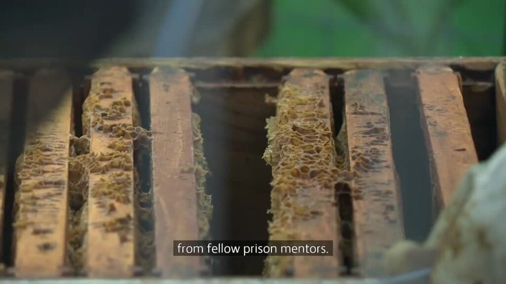 Video for Bees take sting out of serving time for Auckland female prisoners