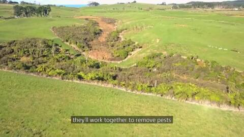 Video for Iwi signs MOU for pest-free Banks Peninsula