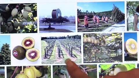Video for Kua aukatihia tētahi Māmā nō Rotorua i ōna tama ki te mahi i te huarākau Kiwi