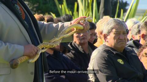 Video for Mauri of Te Matatini taken to Waiheke Island