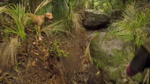 Video for Toa Hunter Gatherer, Series 2 Episode 7