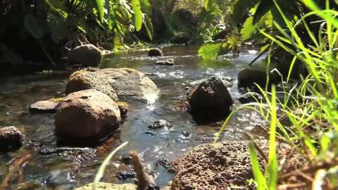 Video for Water quality across NZ rivers improving