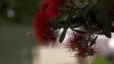 Video for Oranga Ngākau, Ūpoko 20
