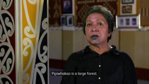 Video for Te Whare Kōrero o Rongowhakaata, 8 Ūpoko 9