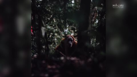 Video for Cook Island Māori photographer documents indigenous stories to the world