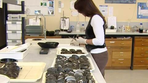 Video for Iwi helping to save freshwater mussels