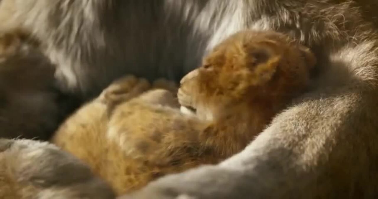 Disney has released the trailer for the new live action The Lion King, which will be released in mid-2019.