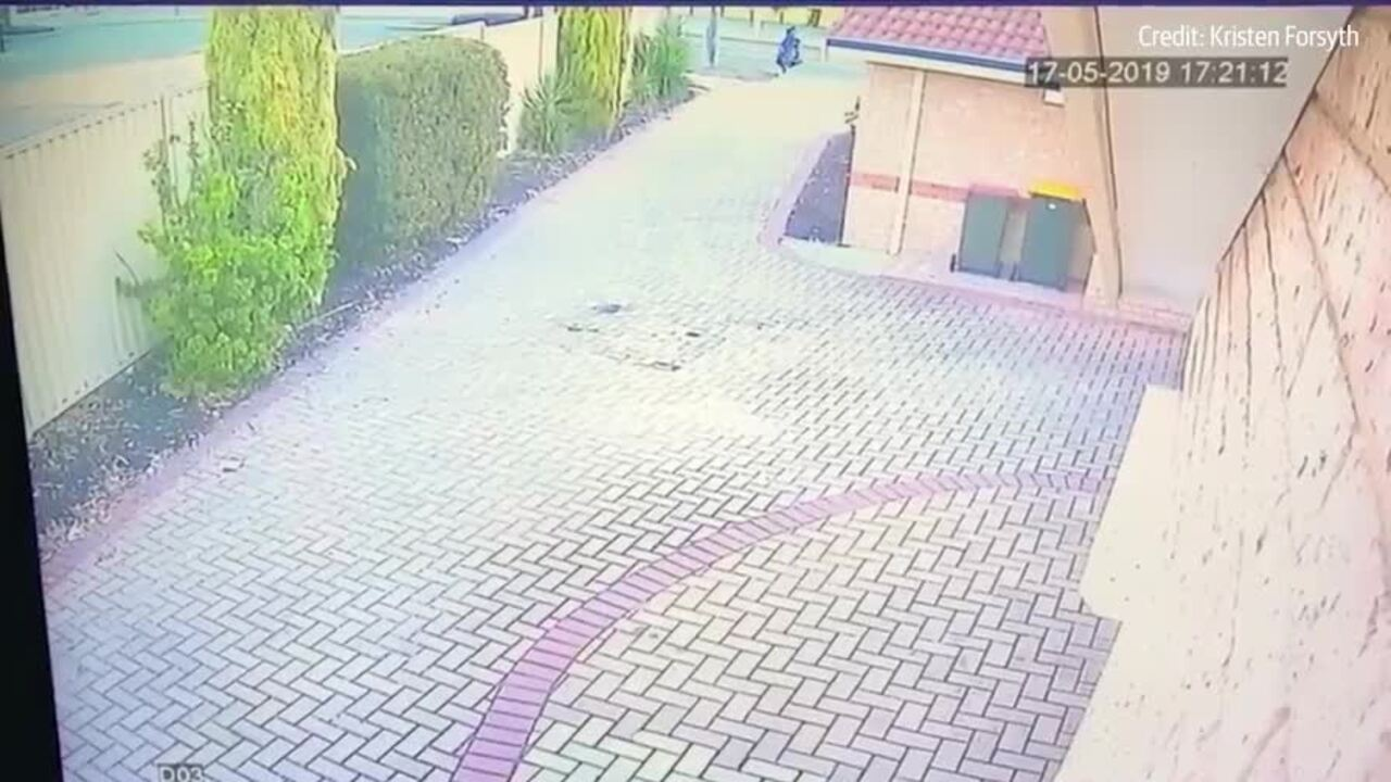 CCTV captured the moment a small dog was taken from a property in Perth.