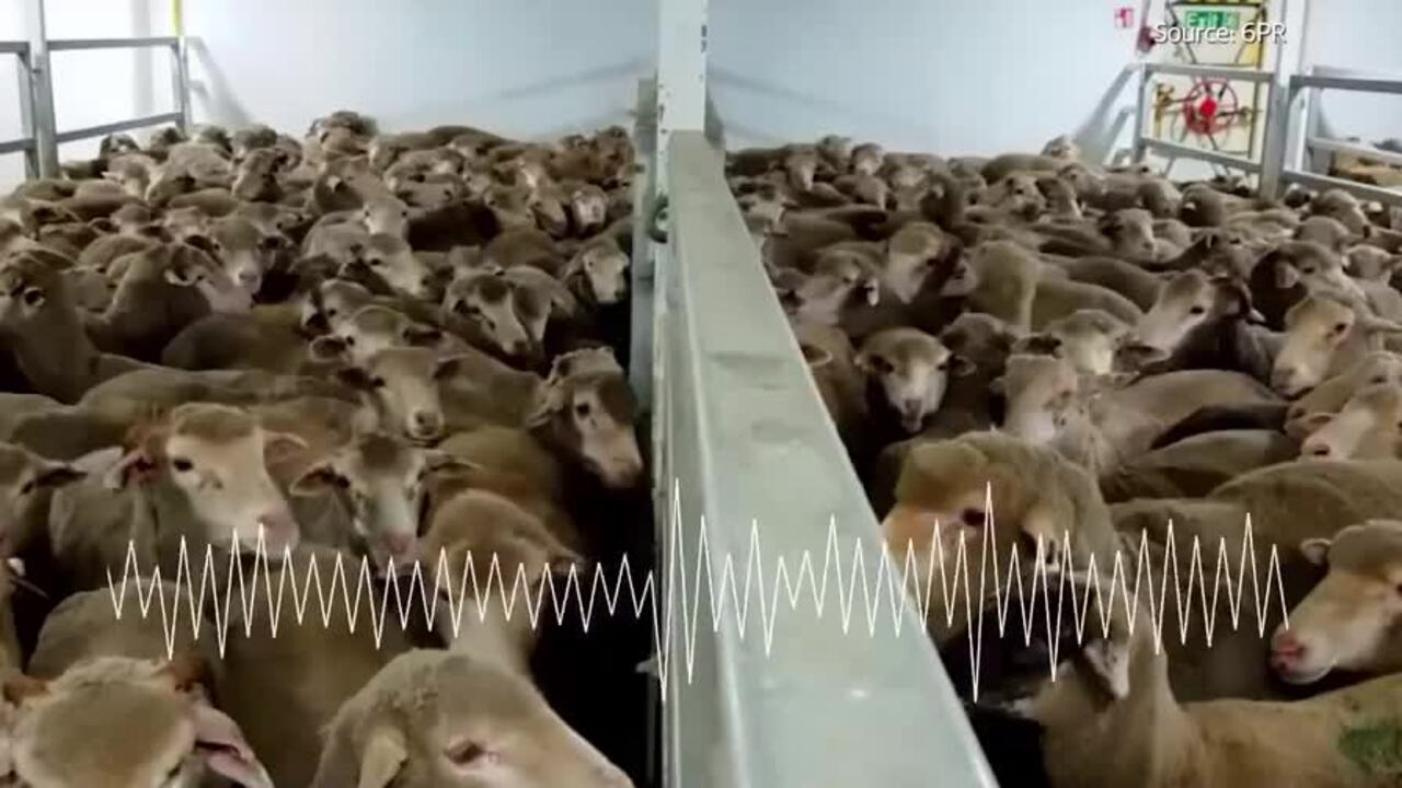 Major doubts have been thrown over leaked videos showing animal cruelty on live export ships coming out of WA. It's been revealed animal activists offered workers on ships huge payments for vision of dead and dying sheep.