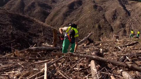 Video for Rākau to be planted on west coast of Te Waipounamu