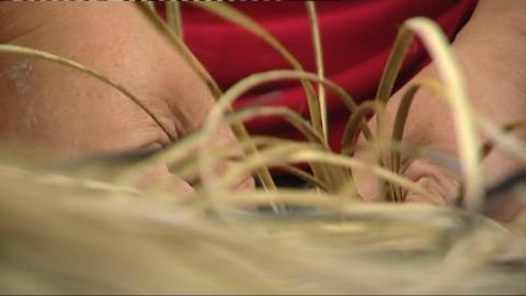 Video for Kura Gallery to start weaving hui for homeless wāhine