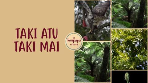 Video for Taki atu Taki mai, Episode 22