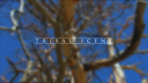 Video for Tribal Scent