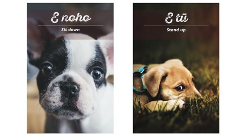 Video for New te reo Māori resource for dogs