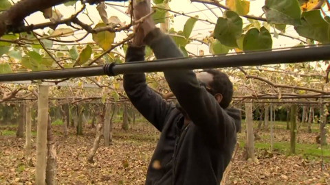 Video for More Māori youth set for horticulture sector