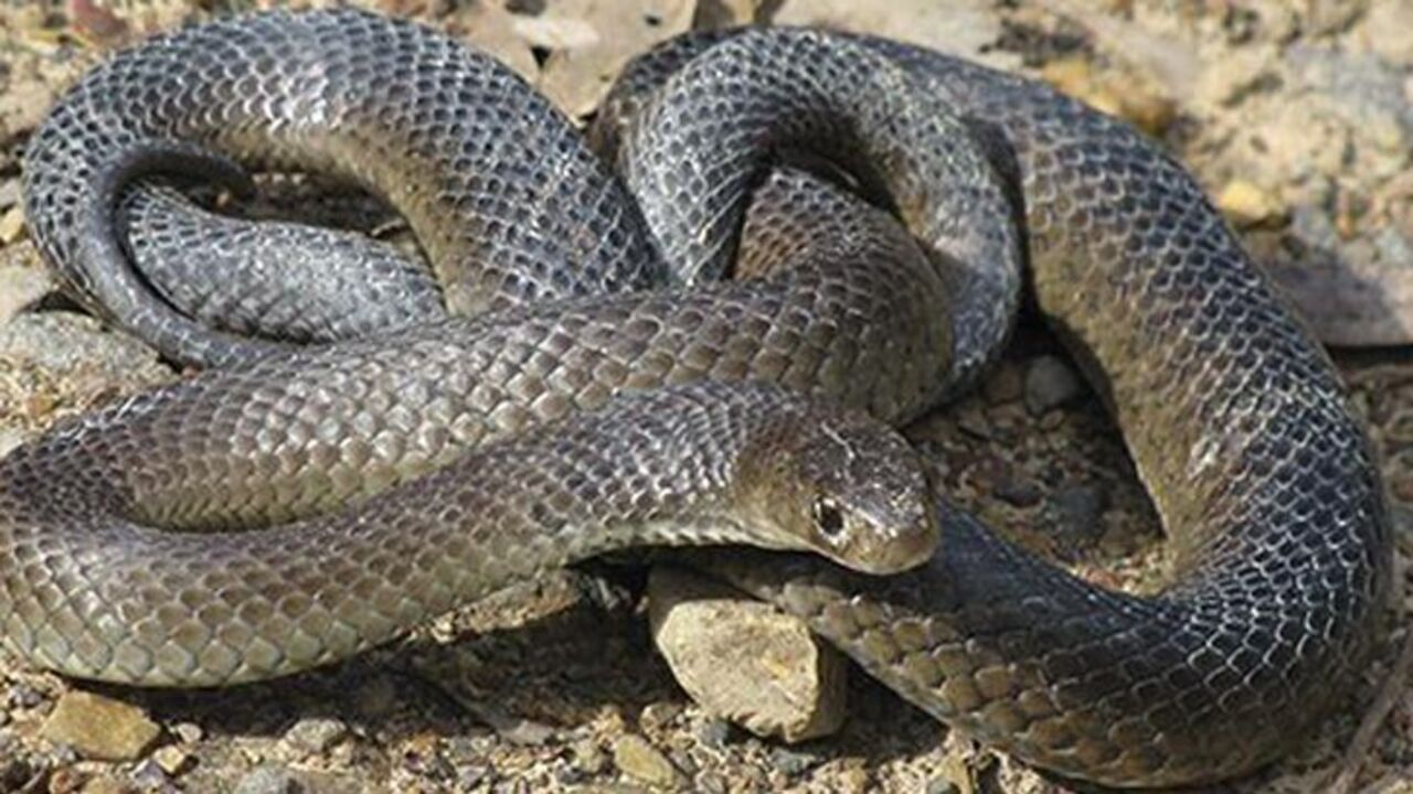 What to do if you see a snake (and where is this likely to