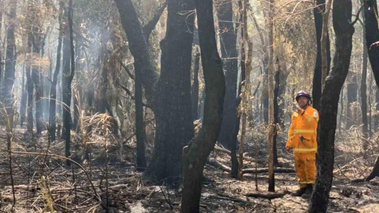 The site where hundreds of koalas burned alive