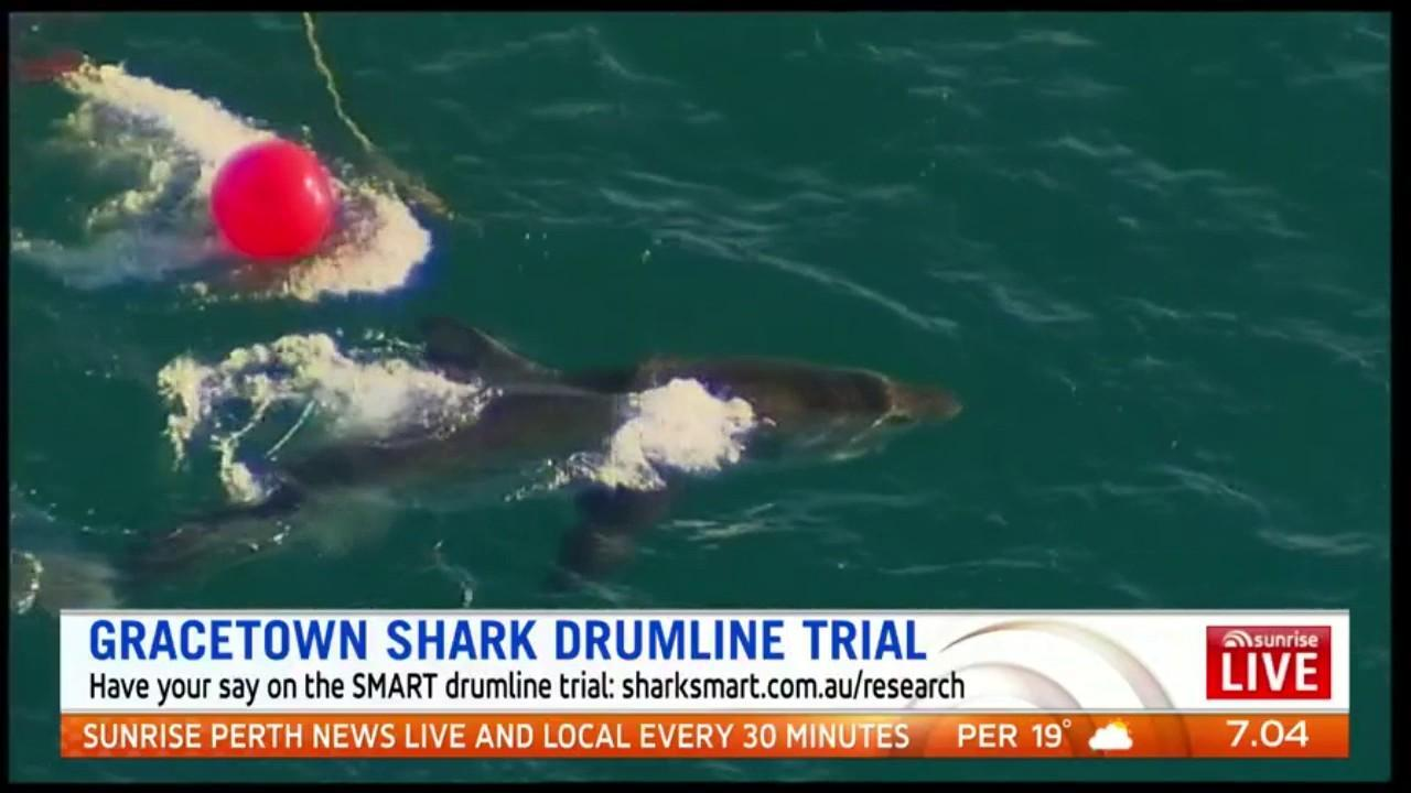 The government wants West Aussies to provide feedback on the SMART drumline trial at the shark hotspot of Gracetown