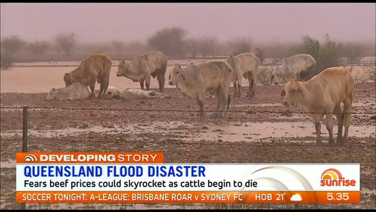 Beef prices could soar across the country as hundreds of thousands of cattle begin to die after farms were flooded
