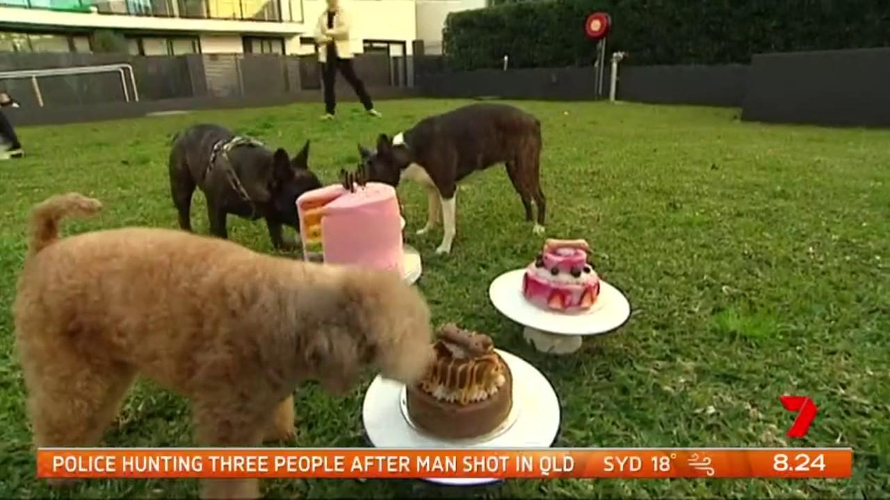 Aussie pet owners spend hundreds of millions of dollars a year on their furry friends