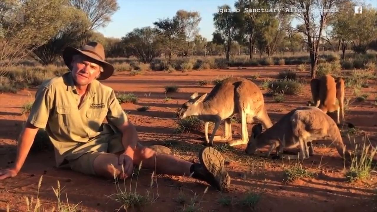 Popular 'ripped' Australian kangaroo, Roger, has passed away at a kangaroo sanctuary, aged 12.