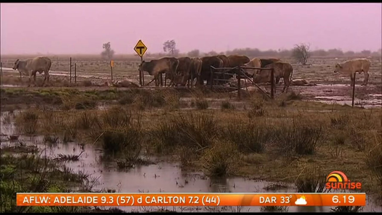 An estimated 500,000 cattle have died on flood ravaged farms across north-Queensland