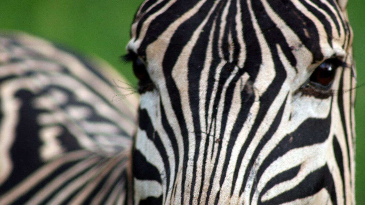 Stephen Scourfield was in the thick of the biggest migration on the planet with more than two million wildebeest and a quarter of a million zebra dotted around the Serengeti.
