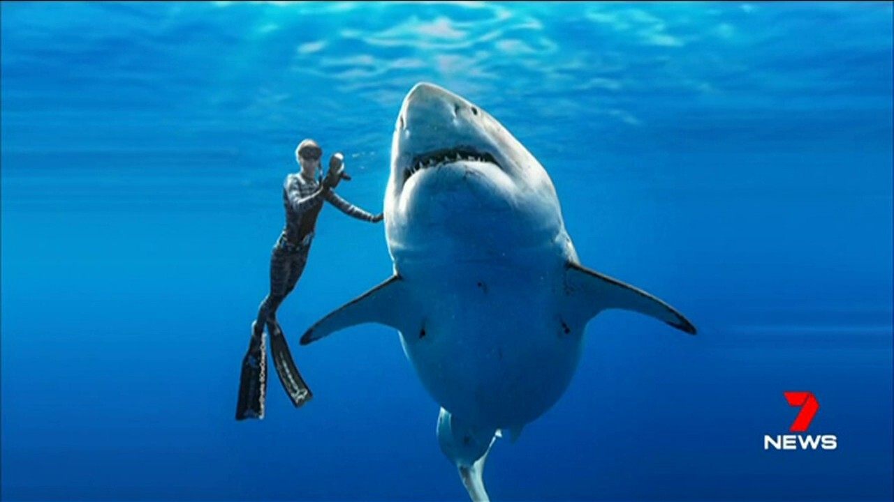 Photographers in Hawaii swam with the 6.5m long shark nicknamed 'Deep Blue' after first spotting her feasting on a whale carcass