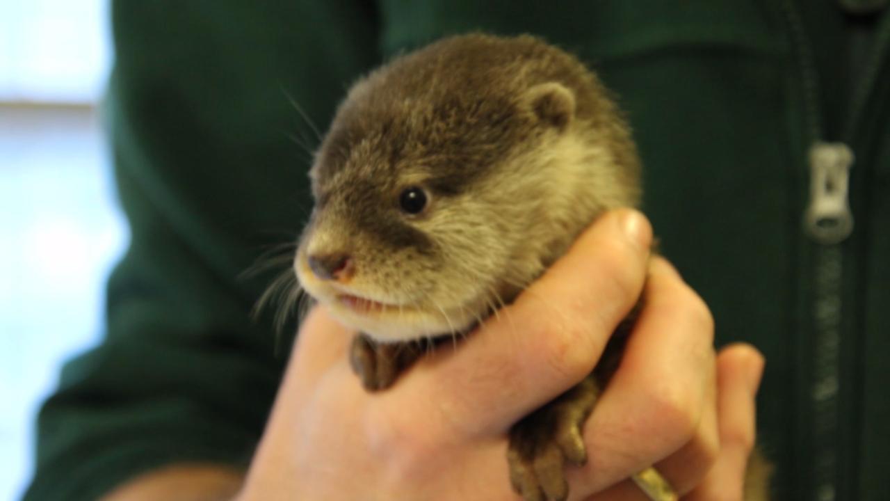 Source: Perth Zoo