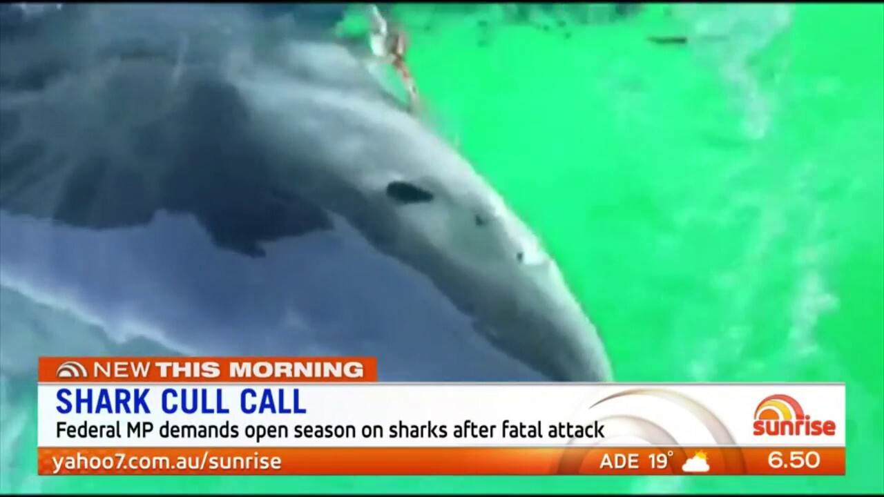 A Federal MP is calling for an open hunting season for shark contractors until numbers are reduced. Sunrise discuss