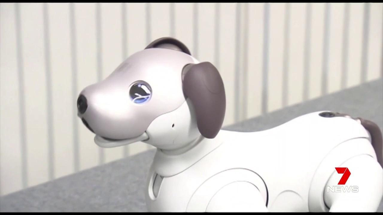 Aibo can shake hands and even give high fives.