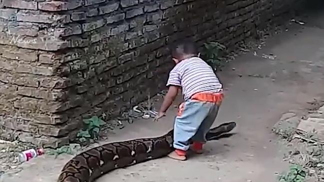 Video of toddler playing with python in Indonesia causes outrage