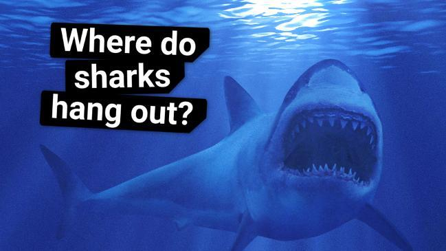 Shark attacks in Australia: death statistics show how deadly