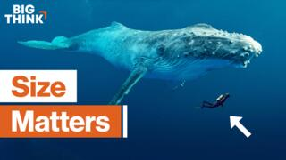 Why do big creatures live longer?