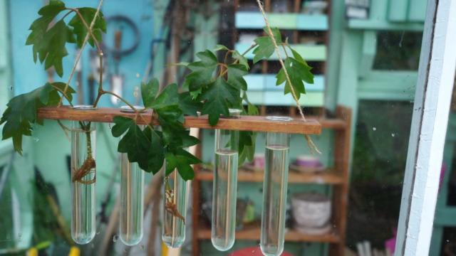 DIY hanging plant propagator