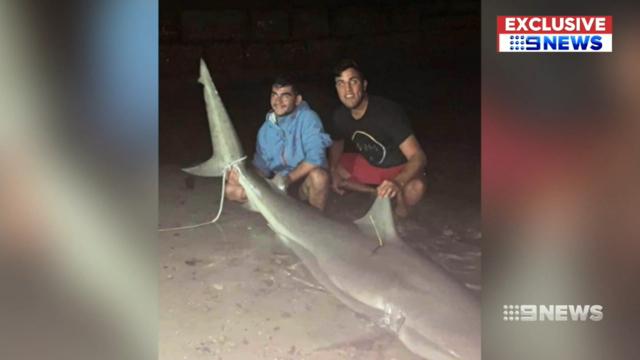 Sydney shark 2 hacked