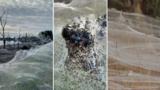 Victoria facing spider plague after floods