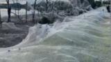 Spiders blanket Gippsland after floods